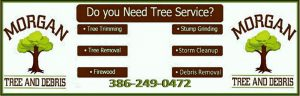 tree service live oak