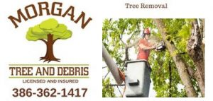tree service safety equipment