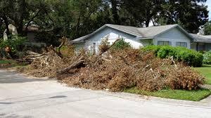 debris removal live oak
