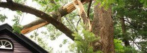 storm damage cleanup live oak fl