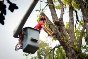 tree removal live oak florida