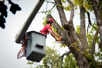 tree removal live oak florida