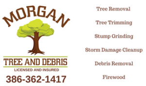 tree service branford florida
