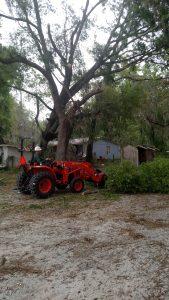 debris removal from live oak tree